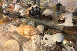 Florida Shell Shop Gallery